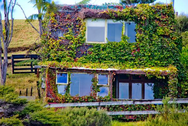 Ivy Cottage - Solscape