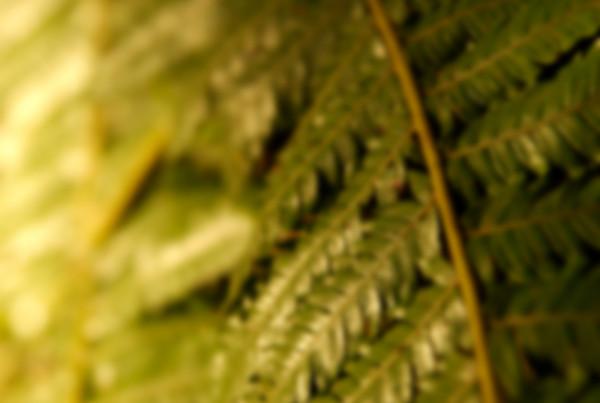 Blur fern - Solscape