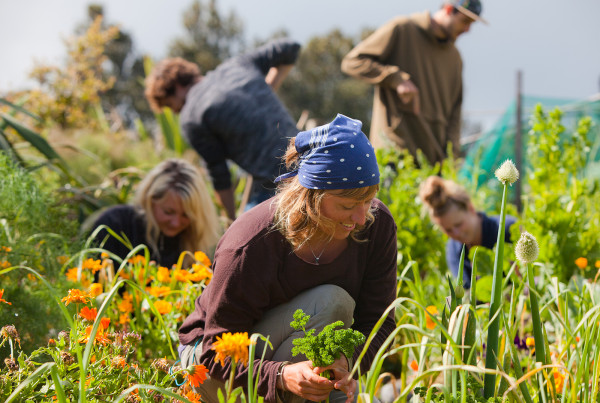 Permaculture and sustainability - Solscape