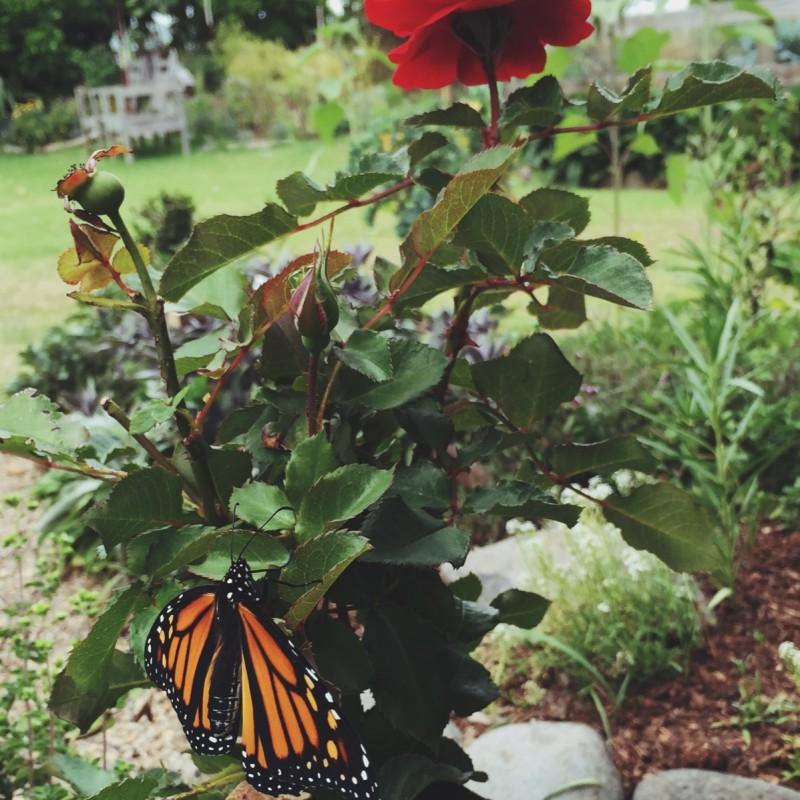 Garden intern - Solscape